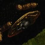 Tête de mort, béret de Jean de Dinteville