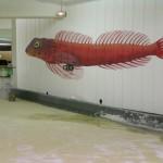 Blennie (poisson benthique). Anamorphose. Parc de stationnement Saint Charles de Marseille.